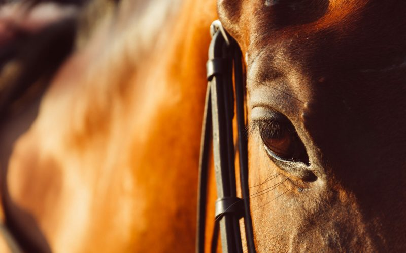 horse eye - soft focus with film filter